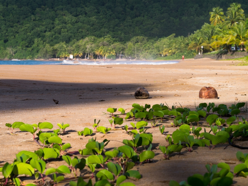 guadeloupe, plage