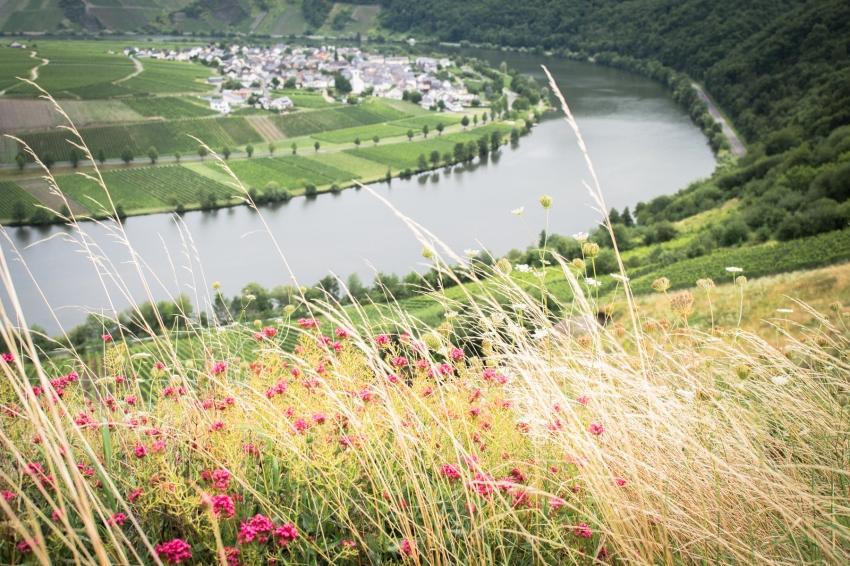 boucle de la moselle, allemagne, Trittenheim, Piesport, Minheimboucle de la moselle, allemagne, Trittenheim, Piesport, Minheim