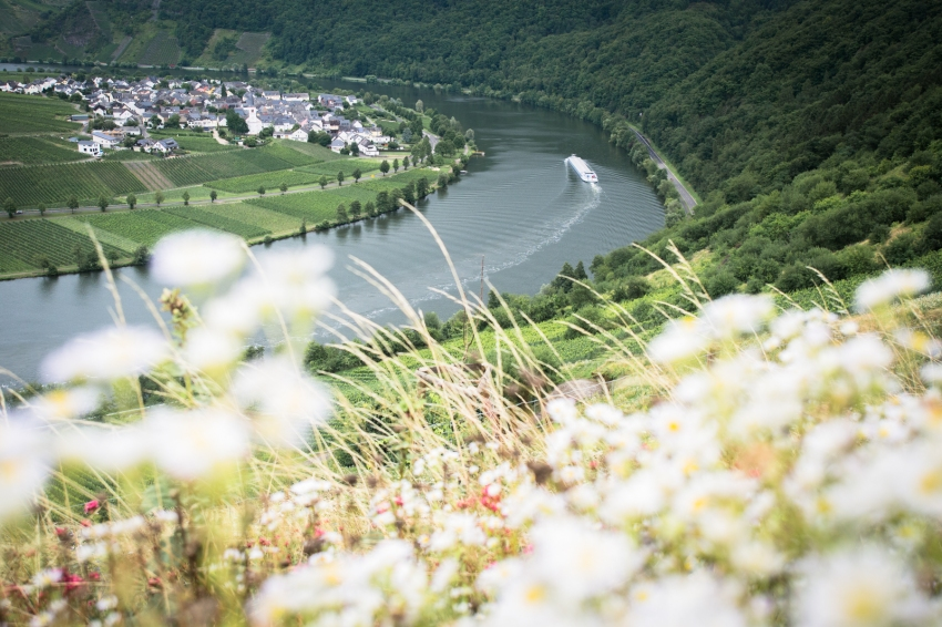 boucle de la moselle, allemagne, Trittenheim, Piesport, Minheim