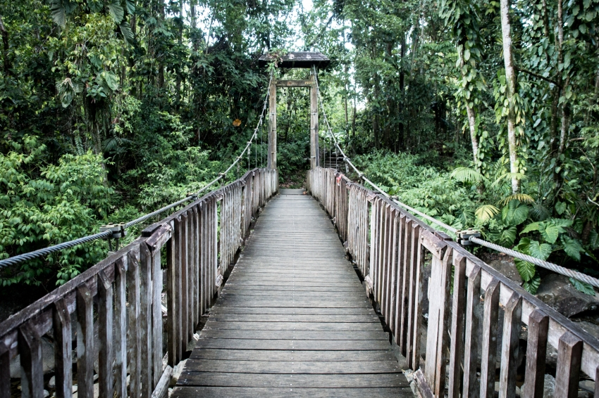 guadeloupe, nature, forêt tropicale