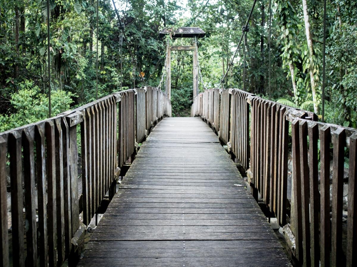 Guadeloupe côté nature, une échappée photographique verte
