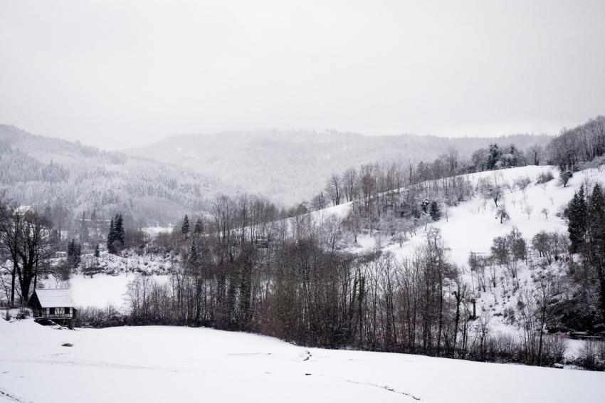 neige, forêt noire, allemagne, schwarzwald, blackforest, seebach