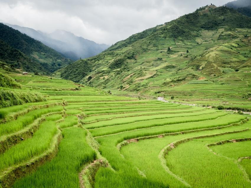 lim thai, lim mong, vietnam, rizières